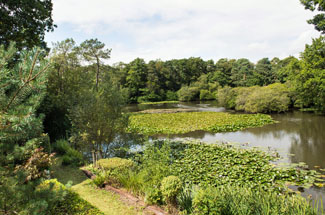 Photo of Indio Lake - Bovey Tracey South Devon England