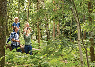 Enjoy woodland walks at Exmoor Gate Lodges near Wiveliscombe in Somerset England