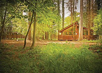 Typical Silver Birch 2 Lodge setting ( Ref LP8125 ) at Thorpe Forest Lodges in Thetford Forest Norfolk