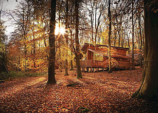 Park setting at Blackwood Forest - Log cabins near Micheldever Hampshire