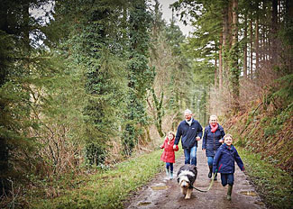 Explore woodland walks at Deerpark Forest Cabins Cornwall near Liskeard
